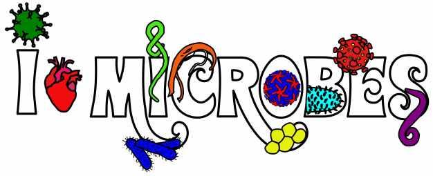 I heart microbes 2